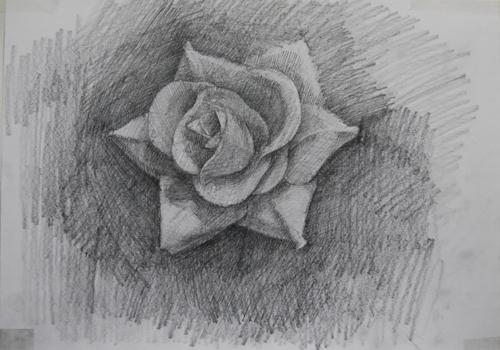 dessinRose1_10