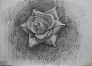 dessinRose1_12