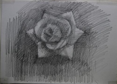 dessinRose1_6