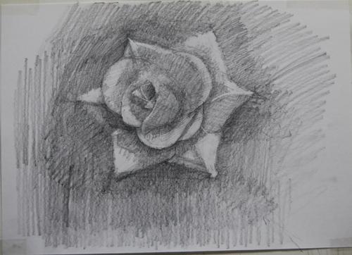 dessinRose1_7