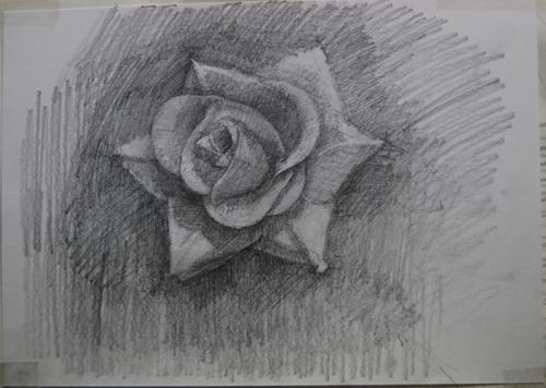 dessinRose1_8