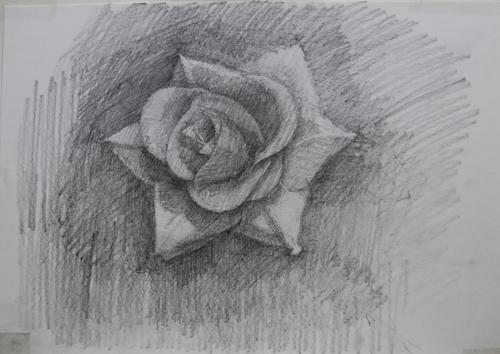 dessinRose1_9